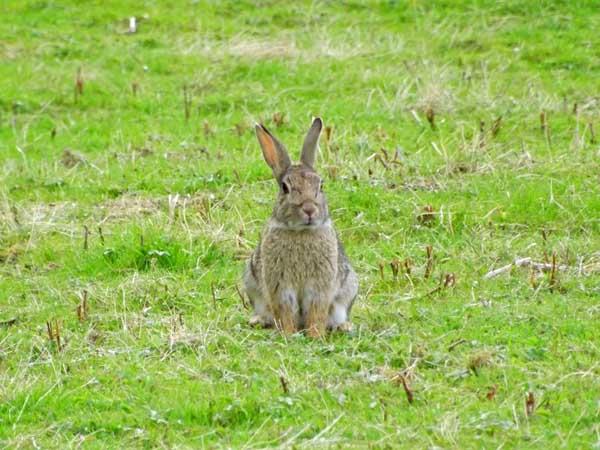 兔子地窝繁殖好处和弊端