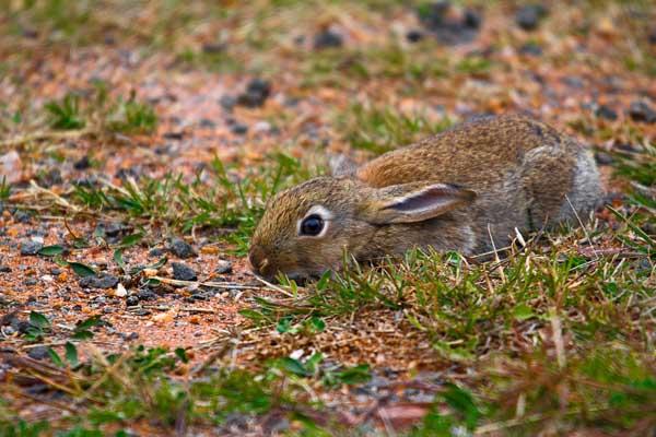 养兔的牧草品种选择