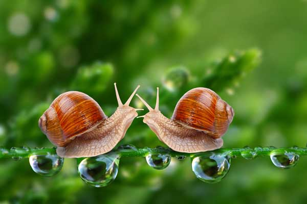 蜗牛的生活习性