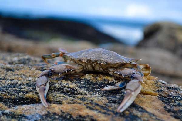 吃螃蟹的禁忌