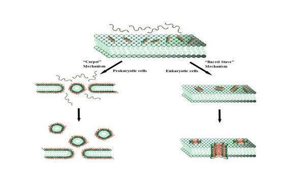 抗菌肽的应用