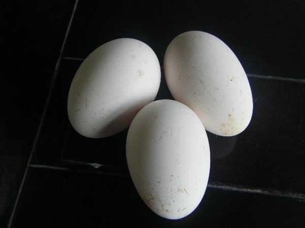 孕妇能吃鹅蛋吗?孕妇吃鹅蛋有什么好处?