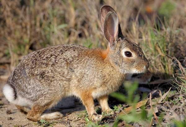 野兔的生活习性