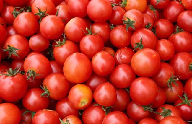 西红柿的营养价值
