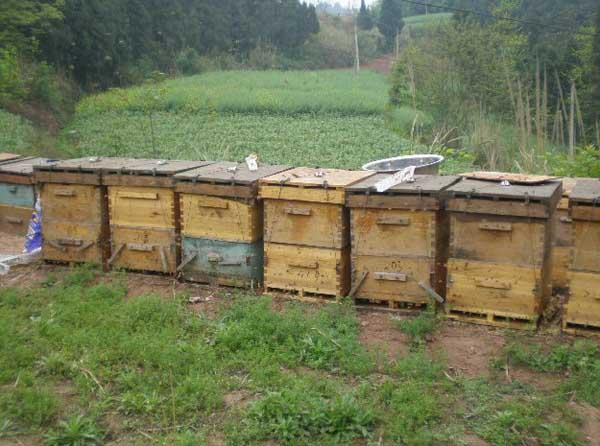 常见蜜蜂养殖工具