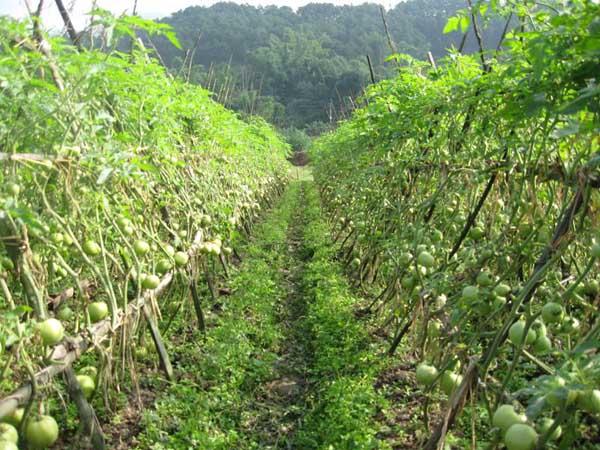 常见蔬菜露天种植时间