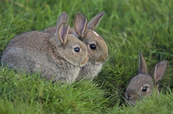2017年养兔子赚钱吗?