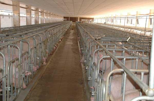 存栏上万头养猪场建设方案