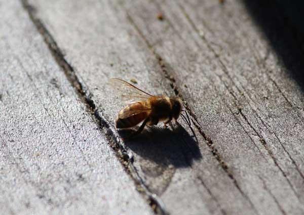 蜜蜂养殖场消毒技术