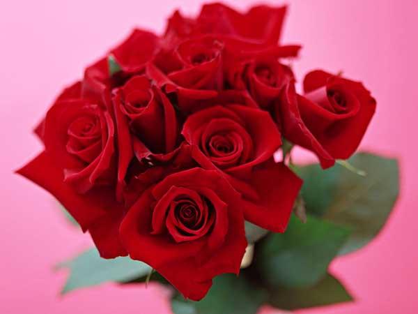 玫瑰花茶的功效与作用及禁忌
