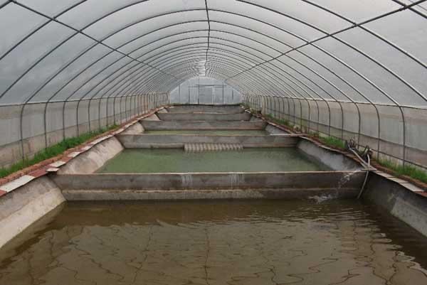 甲鱼养殖场的建设