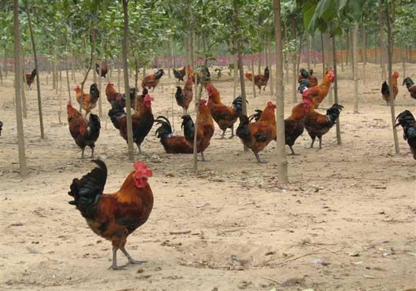养殖什么风险小利润高?