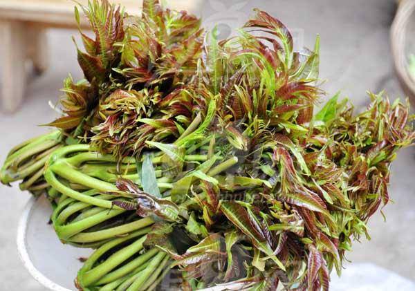 香椿的功效与作用及食用方法
