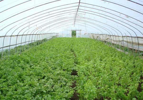 大棚蔬菜利润与成本分析
