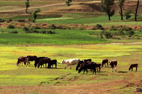 牛养殖场常用的消毒措施