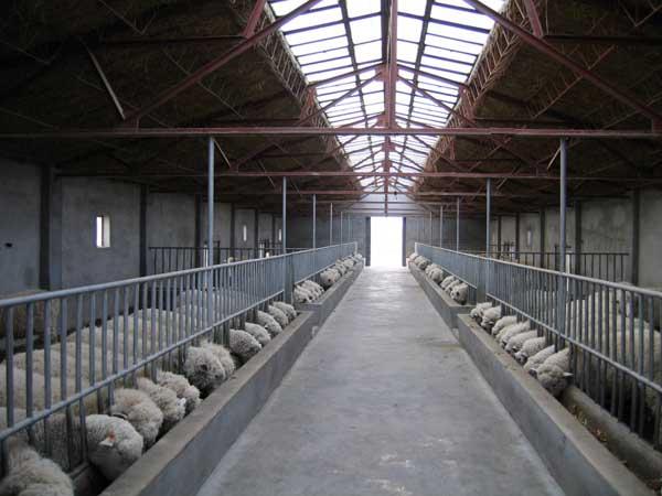 羊养殖场的科学消毒技术