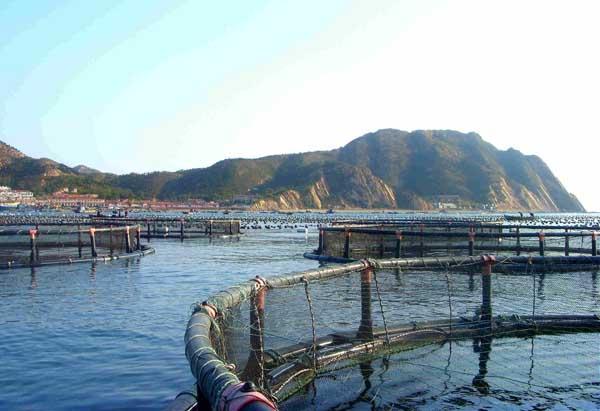 工厂化养鱼关键技术及发展策略