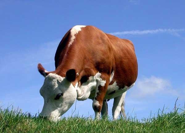 奶牛饲料添加剂的种类