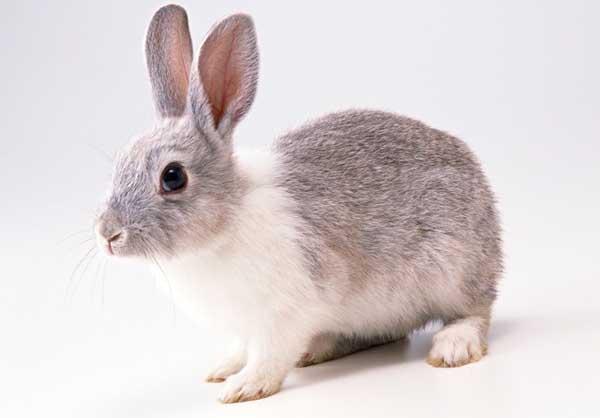 如何成功发展兔子养殖?