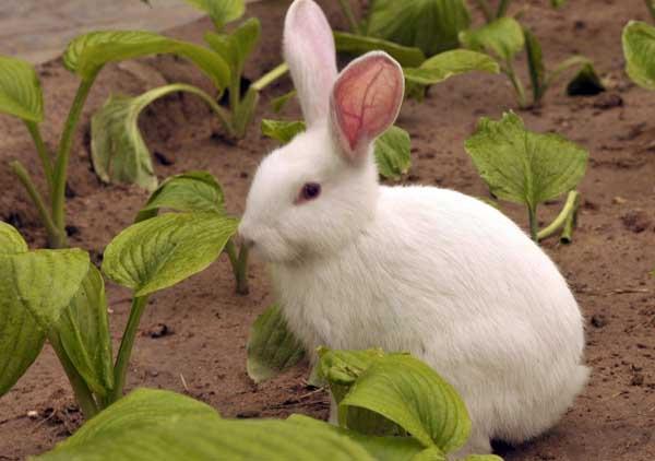 新手养兔的几个小忌讳