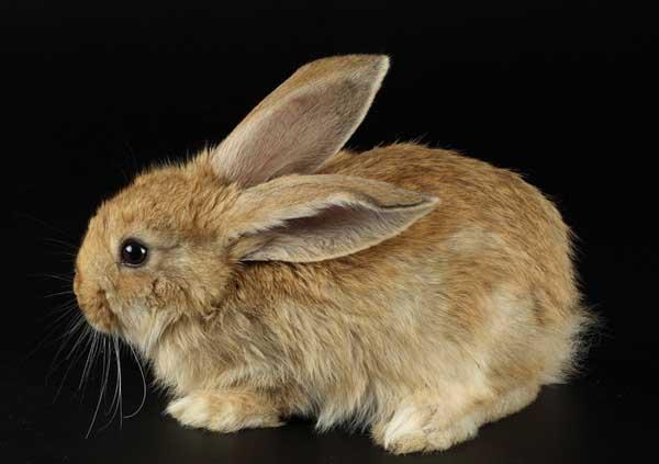 野兔冬季如何防寒保暖?