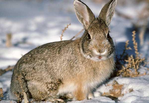 喂养兔子的常用饲料