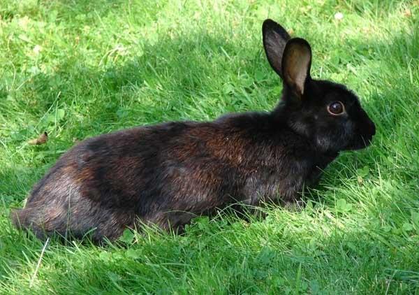 教你在冬季如何养好兔子