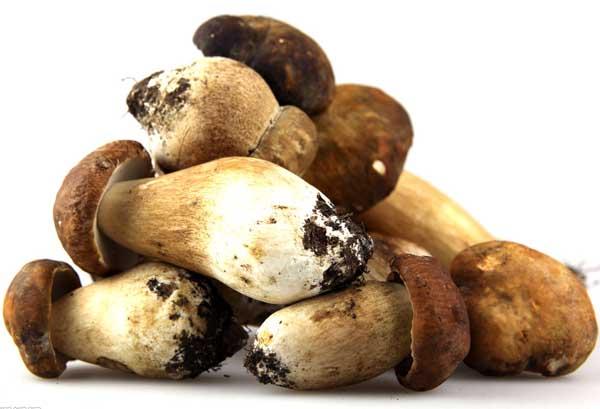 草菇种植技术
