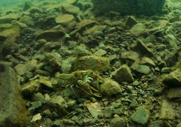 淡水小龙虾水质管理技术