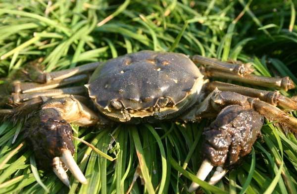 河蟹养殖塘的日常管理方案