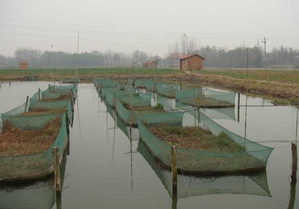 黄鳝养殖网箱制作及安装