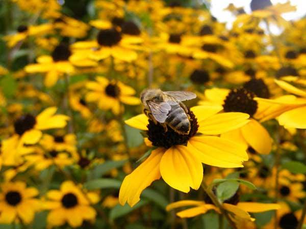 蜜蜂的双王繁殖技术