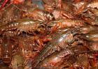 淡水小龙虾饲料种类