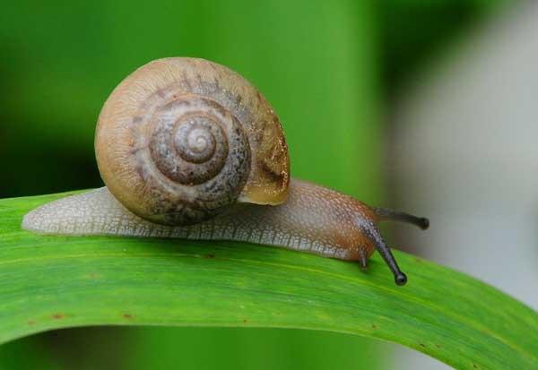 蜗牛养殖的饲养条件