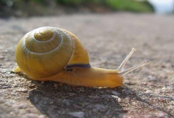 常见蜗牛病的防治方法