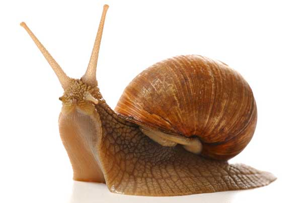 湿度对白玉蜗牛的影响