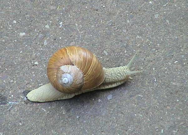 蜗牛养殖的病虫害防治