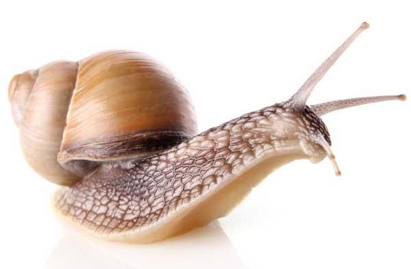 冬季白玉蜗牛养殖保温措施
