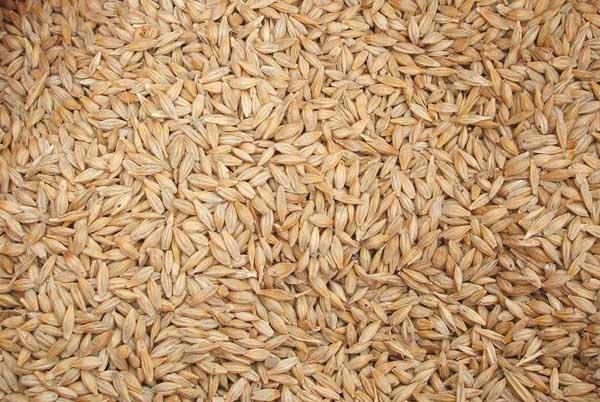 杂粕代替豆粕有哪些问题