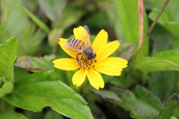 蜜蜂自然分蜂控制技术