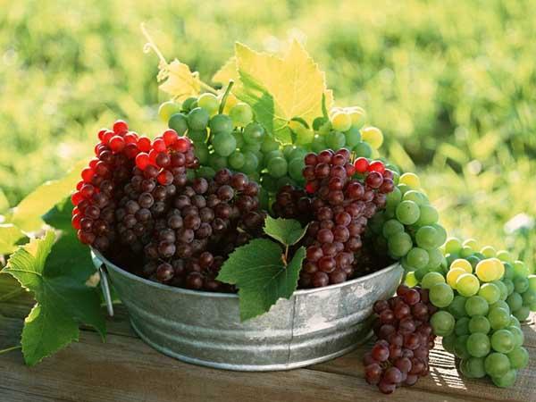 一些常见对果树禁用或慎用的农药