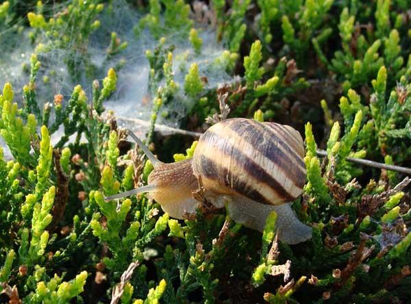 蜗牛是害虫还是益虫?