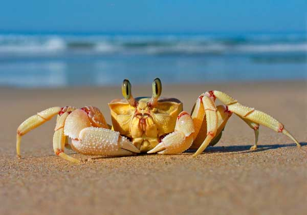 我国常见的螃蟹种类有哪些?