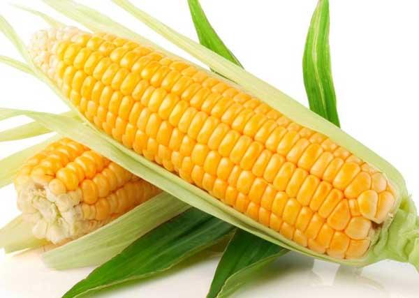 水果玉米种植技术