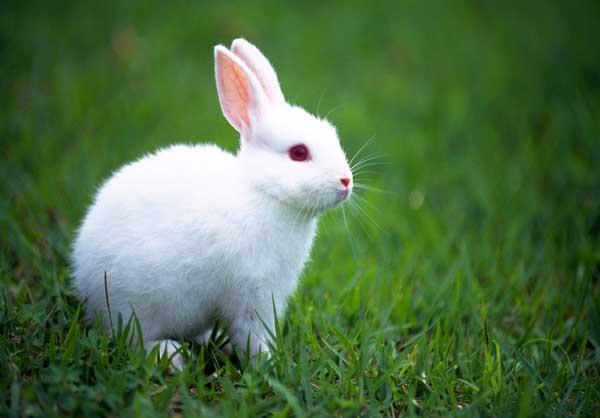 兔子拉稀怎么办?