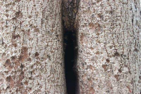 如何捕捉树洞里的野生蜜蜂