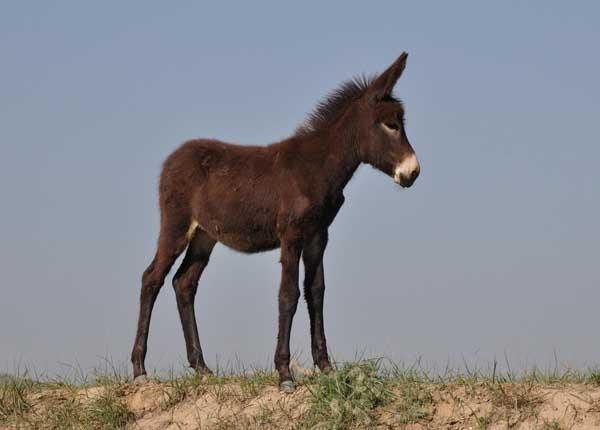 驴的养殖技术
