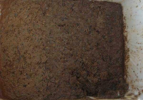黄鳝饲料配制与使用