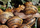 蜗牛的种类有哪些?
