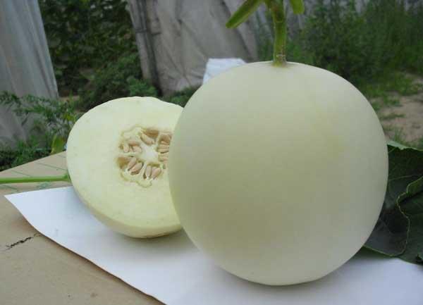 孕妇能吃香瓜吗?